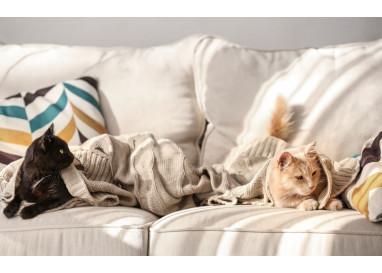 """Ткань """"антикоготь"""" - миф или спасение для дивана?"""